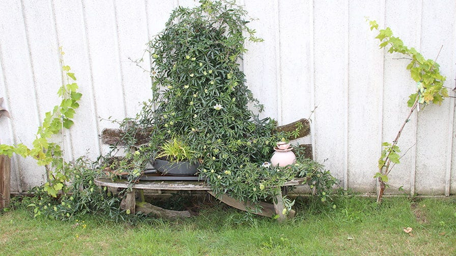 The bench in Raddatz home yard